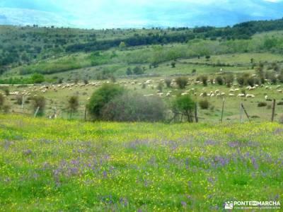 Peña Quemada-Ladera de Santuil; fuentona soria patones de arriba rutas parque de redes niveles